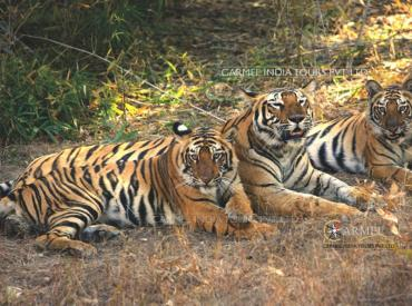 Bandhavgarh National Park Travel info and tour packages