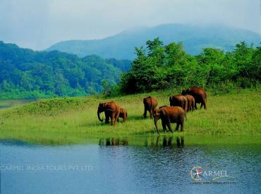 Periyar national park,  Thekkady Tour and Travel Info