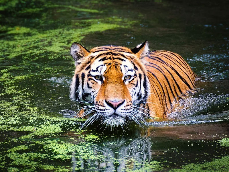 Tiger safari Jim Corbett National Park