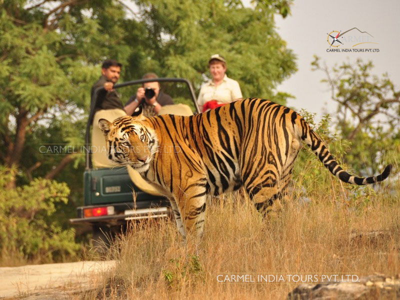 Jeep Safari Jim Corbett National Park Tour package