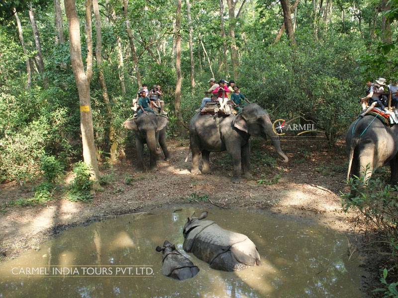 Royal Chitwan National Park tour package