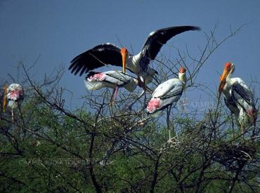 Bird Watching Tour Bharatpur Bird Sanctuary