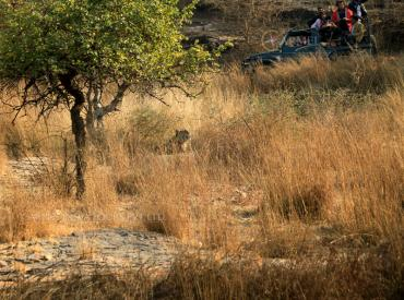 Tiger Safari Ranthambore national park and Tiger Reserve